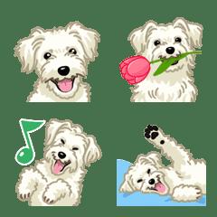 ジャックラッセルテリア(犬)- ラフ/白