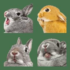 ほほえみフレンズ ウサギの絵文字