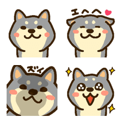 黒しばワンコ(黒柴犬)