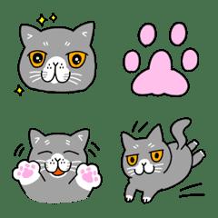 猫、ぶりお(ブリティッシュショートヘア)